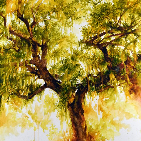 Art Plantation Tree Savannah Watercolor by Ian Crawley
