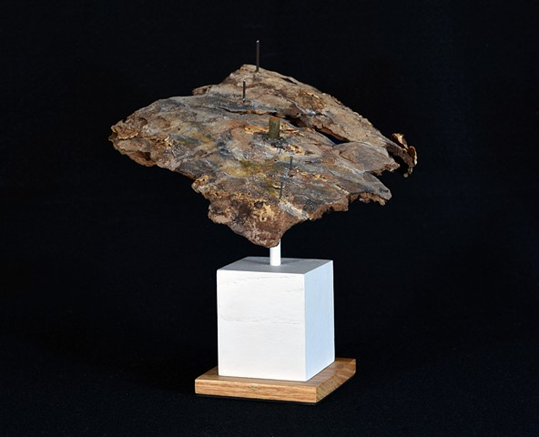 Ian Crawley Art Sculpture Tree Bark