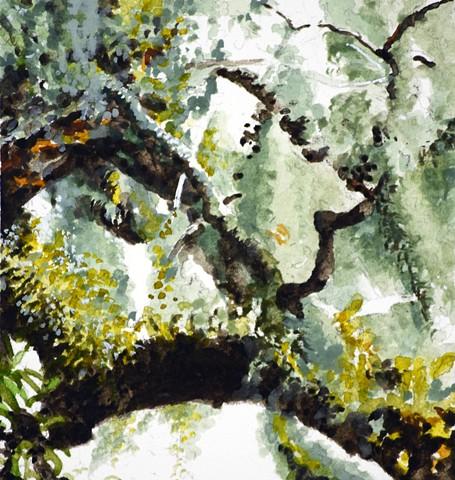Art Savannah Tree Watercolor Study by Ian Crawley