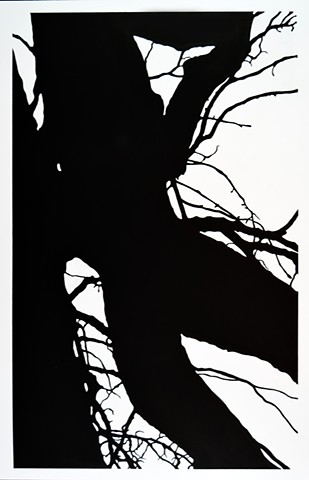 Tree Branch Abstract Ink Drawing