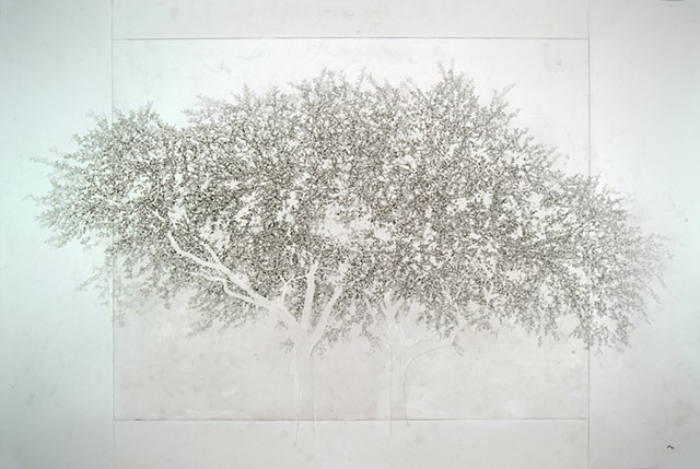 Art Tree Graphite Ink Drawing by Ian Crawley