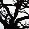 Savannah Tree Branch Abstract Large 11