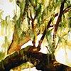 Savannah Tree Study 3