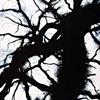 Savannah Tree Branch Abstract Large 7