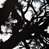 Savannah Tree Branch Abstract Large 8
