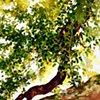 Savannah Tree Study 7