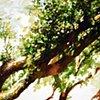 Savannah Tree Study 8