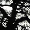 Savannah Tree 2