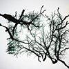 Digital Trees 13