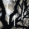 Savannah Tree Branches 1