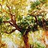 Plantation Tree 1
