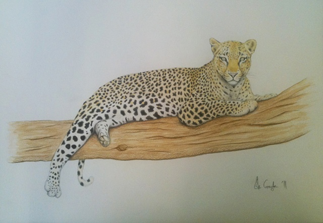 Watercolour drawing of Leopard