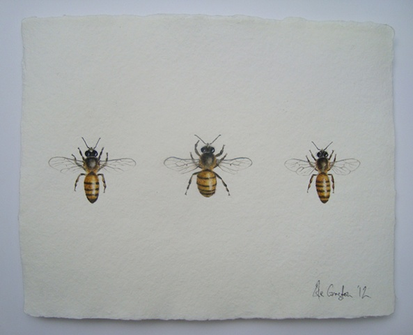 drawing of honey bees