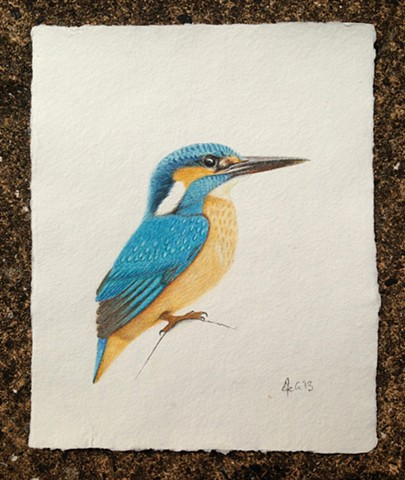 A new drawing of a Kingfisher on beautiful handmade paper.
