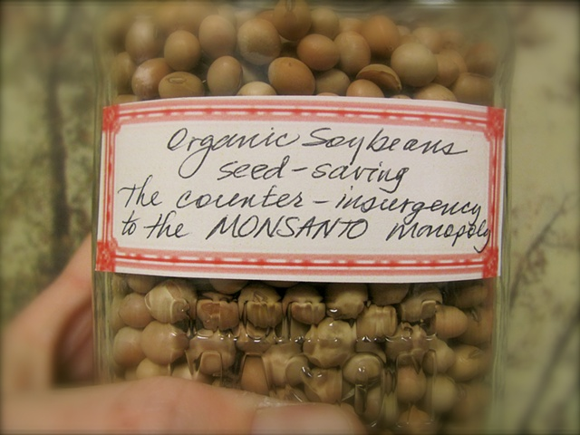 Monsanto Chemicals own the seed patents and legal rights to over 93% of all the soybean seeds planted in the land of the free and the home of the brave.