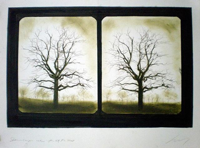 Stereoscopic Trees
