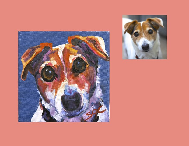 Color Dog portrait, pet portrait, dog portrait, custom oil dog portrait, portrait of a terrier, portrait of a Jack Russell Terrier, Color Dog portrait by Sarah Gayle Carter