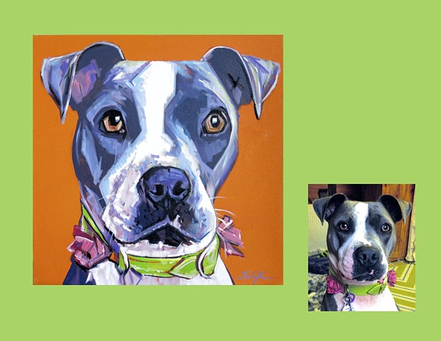 color dog portrait, custom dog portrait, portrait of a Pit Bull, Color Dog portrait by Sarah Gayle Carter