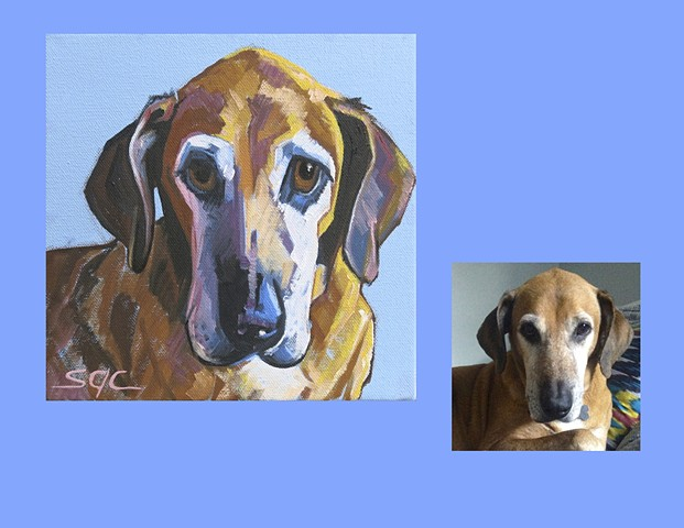 Color Dog portrait, pet portrait, dog portrait, custom oil dog portrait, Color Dog portrait by Sarah Gayle Carter