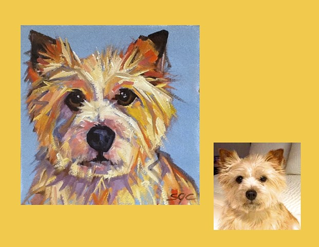 Color Dog portrait, pet portrait, dog portrait, custom oil dog portrait, portrait of a terrier, portrait of a Norwich Terrier, Color Dog portrait by Sarah Gayle Carter