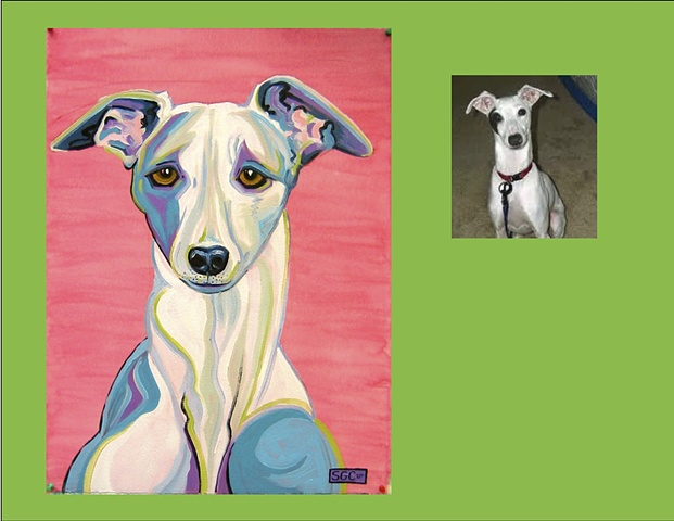 Talulah is an Italian Greyhound, This is her Color Dog portrait