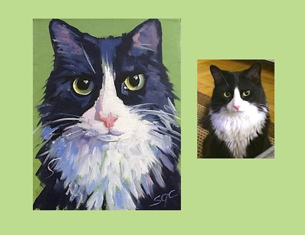 Color Cat portrait, portrait of a black cat, custom cat portrait, cat portrait by Sarah Gayle Carter