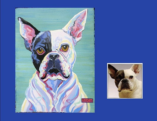 Rex is a Boston Terrier, This is his Color Dog portrait
