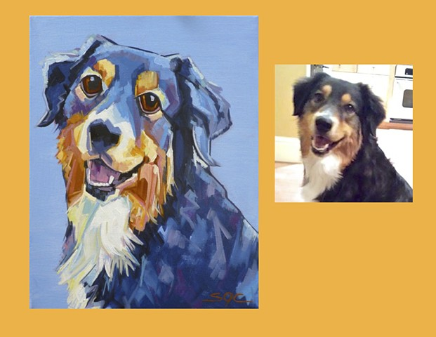 Color Dog portrait, pet portrait, dog portrait, custom oil dog portrait of a Australian Shepherd mix, portrait of an Aussie mix, Color Dog portrait by Sarah Gayle Carter