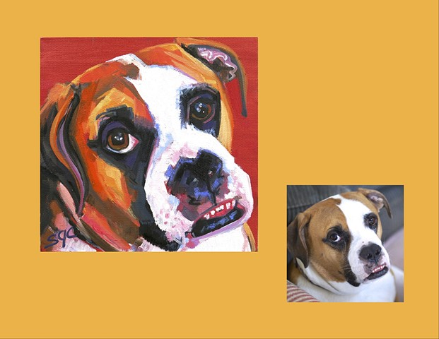 Color Dog portrait, pet portrait, dog portrait, custom oil dog portrait, portrait of a Boxer, custom Color Dog portrait by Sarah Gayle Carter