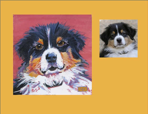 Macho is an Australian Shepherd, this is his Color Dog portrait