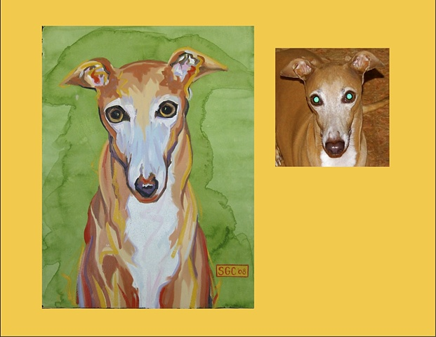 Rudy is an Italian Greyhound  This is his Color Dog portrait