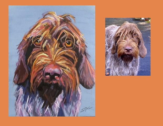 Color Dog portrait, pet portrait, dog portrait, custom oil dog portrait, portrait of a German Wire Haired Pointing Griffon, Color Dog portrait by Sarah Gayle Carter