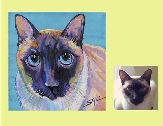 Color Cat portrait, portrait of a Siamese cat, custom cat portrait, cat portrait by Sarah Gayle Carter