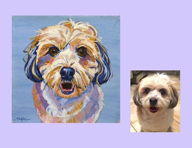 Color Dog portrait, pet portrait, dog portrait, custom oil dog portrait of an Havanese, painting of an Havanese, portrait of a Havanese, Color Dog portrait by Sarah Gayle Carter