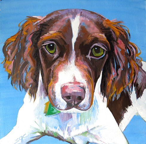 portrait of a Brtttany Spaniel. Custom pet portrait. Custom dog portrait. Oil painting of a Brittany Spaniel. Color Dog portrait by Sarah Gayle Carter.