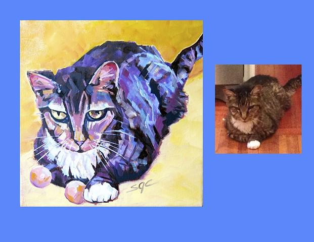 Color Cat portrait, portrait of a calico cat, custom cat portrait, cat portrait by Sarah Gayle Carter