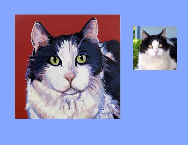 portrait of a cat, portrait of a black and white cat, Color Cat portrait by Sarah Gayle Carter, custom pet portrait by Sarah Gayle Carter