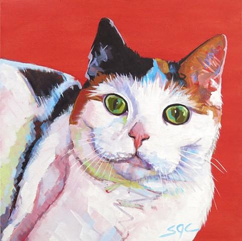 Color Cat portrait, Color Dog portrait, pet portrait, cat portrait, custom oil cat portrait, portrait of a tri colored cat, Color Dog portrait by Sarah Gayle Carter
