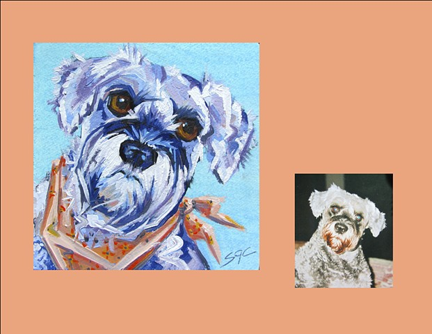 Color Dog portrait, pet portrait, dog portrait, custom oil dog portrait, portrait of a miniature schnauzer, custom portrait by Sarah Gayle Carter