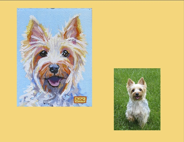 Lili is a Yorkshire Terrier, This is her Color Dog portrait