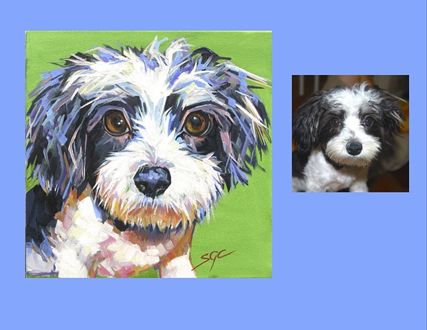 Color Dog portrait, pet portrait, dog portrait, custom oil dog portrait, portrait of a terrier, portrait of a Malti-Poo, Color Dog portrait by Sarah Gayle Carter