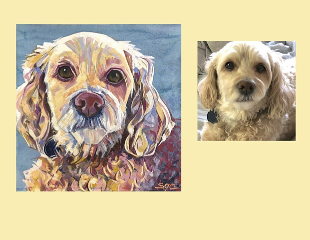 Color Dog portrait, pet portrait, dog portrait, custom oil dog portrait, painting of a Cocker Spaniel, Color Dog portrait by Sarah Gayle Carter