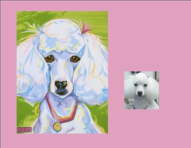 Celeste is a standard Poodle, this is her Color Dog portrait