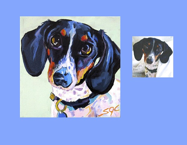 color dog portrait, custom dog portrait, portrait of a Dachshund, Color Dog portrait by Sarah Gayle Carter, pet portrait