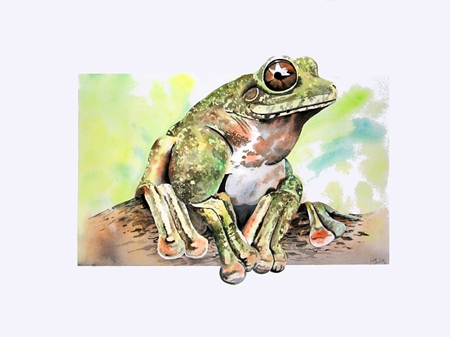 painting of a Frog by Corbett Sparks