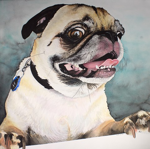 pug dog watercolor painting by Corbett Sparks