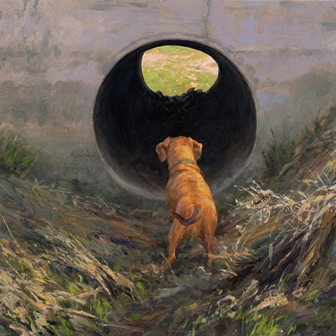 Culvert, dog, pet, sunlight, landscape, animal, humorous