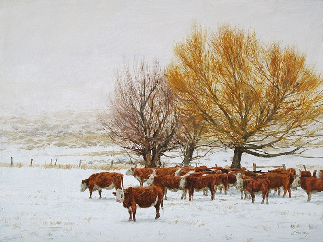 Cattle in snow, herefords, golden willow