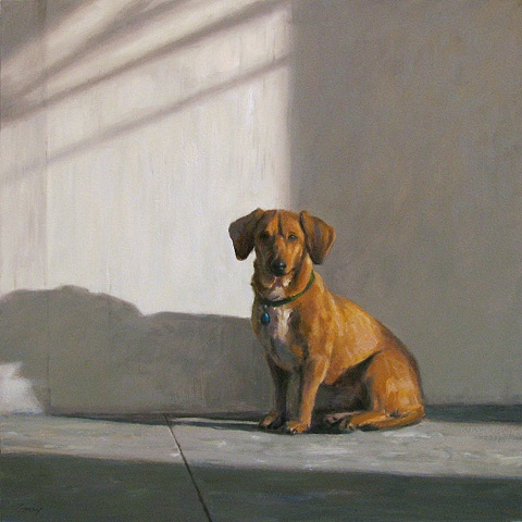 Interior, tan dog sitting next to white wall, sunlight and shadow,