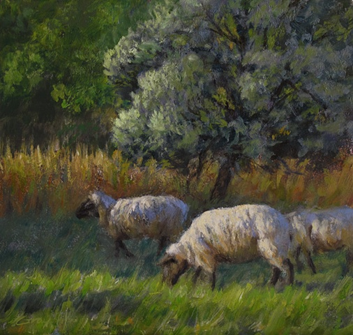 Sheep grazing green grass, trees behind, sunlight